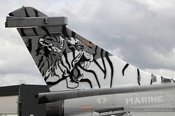 Tiger, Tiger , Tiger !!